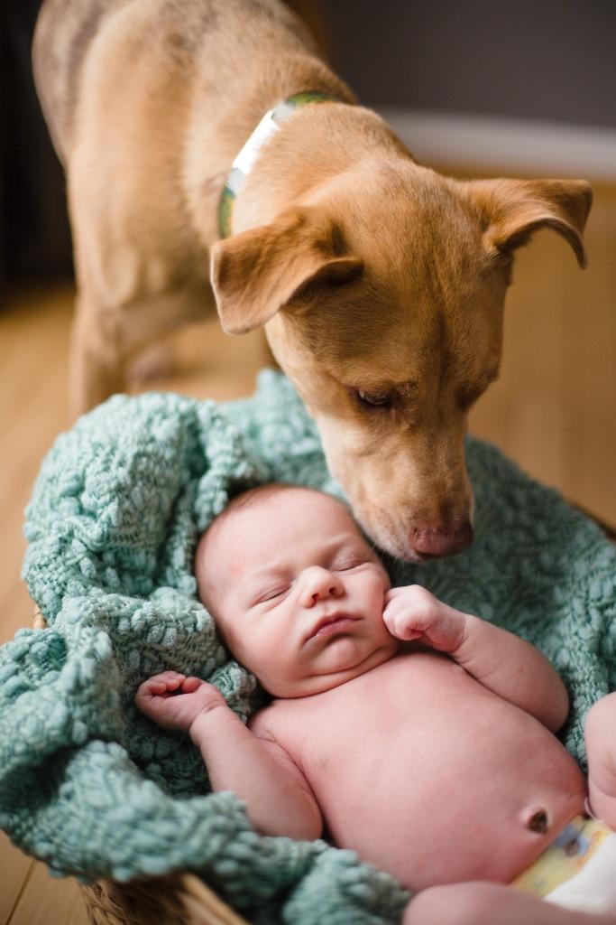 Winchester Va Newborn Photographer-8